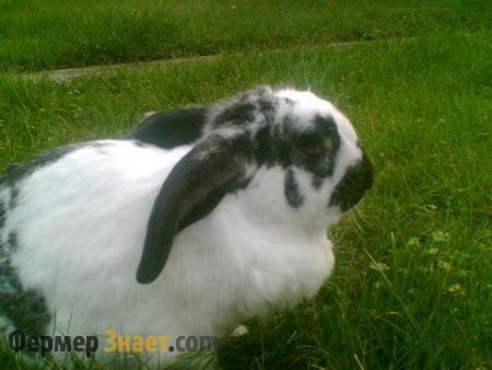 Кролик бабочка на траве