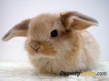 Маленький и красивенький кроль