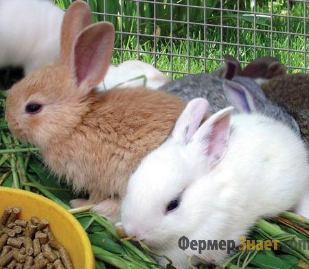 Кроли едят комбикорм