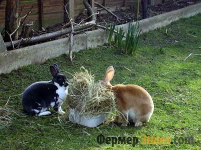 Кроли едят сено