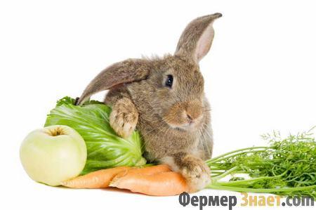 Кролики обожают овощи