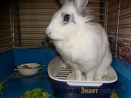 Белый кролик на лотке