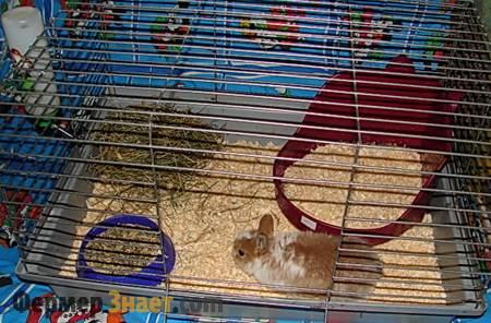 Кролик в клетке с лотком