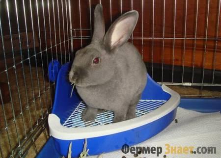 Серый кролик в клетке на лотке