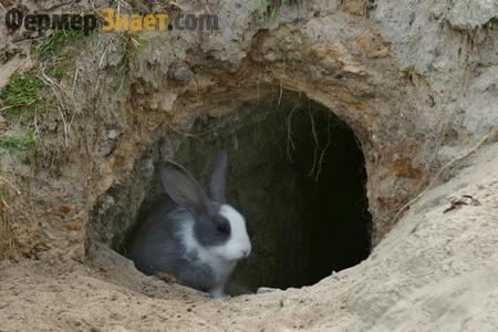 Ямное содержание кролей