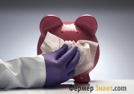 Свинка заболела