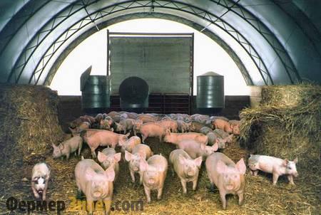Канадская технология содержания свиней