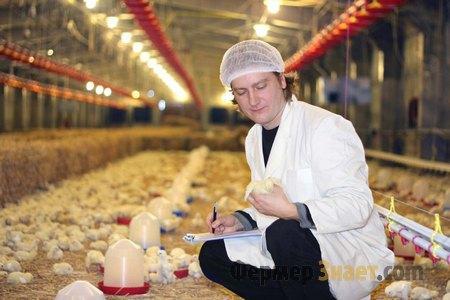 Обследование кур на ферме