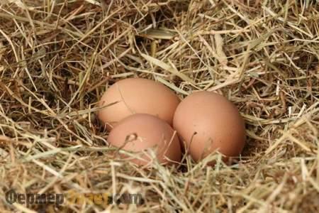 Яйца в курином гнезде