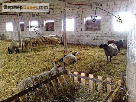 Овчарня для овец