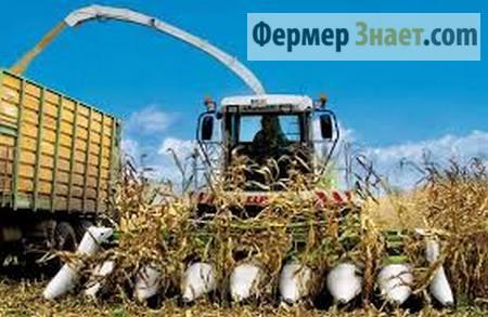 Уборка урожая кукурузы