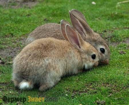 Два кроля