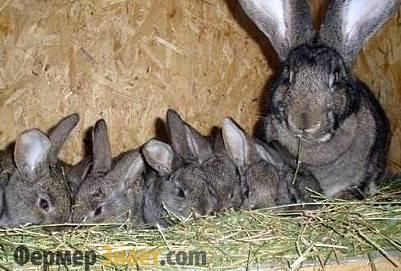 Размножение кроликов в домашних условиях