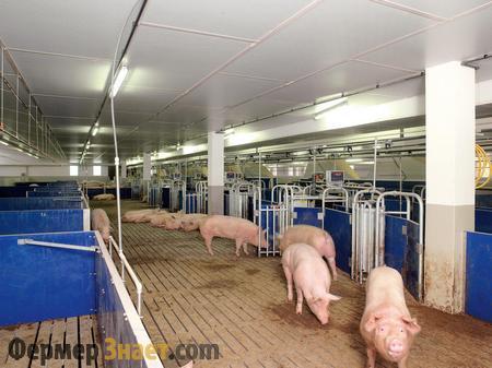 Обустройство свинокомплекса