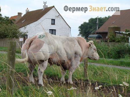 Содержание скота в летнее время