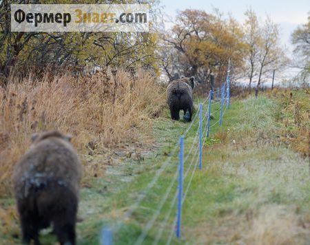 Защита от нападения диких животных