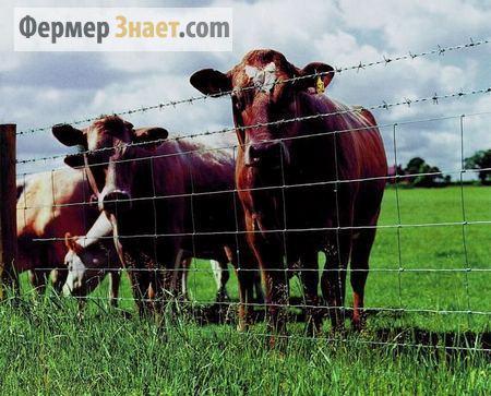 Использование электропастуха при выпасе скота
